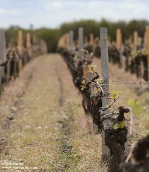 Bordeaux Guide