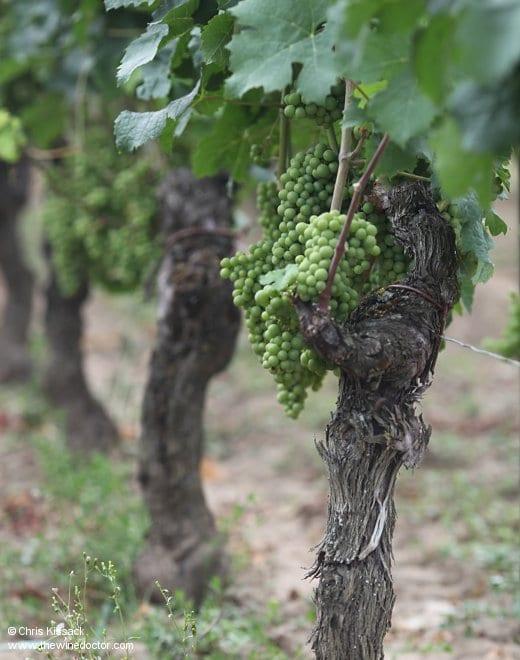 Bordeaux Wine Guide: The New Bordeaux