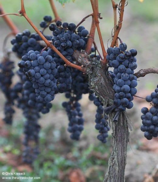 Bordeaux: Winemaking COntroversies
