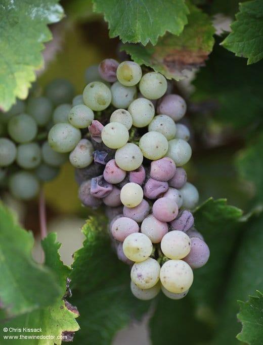 Loire Varieties: Chenin Blanc