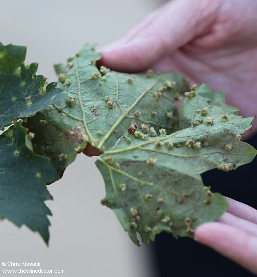 Bordeaux: Viticulture