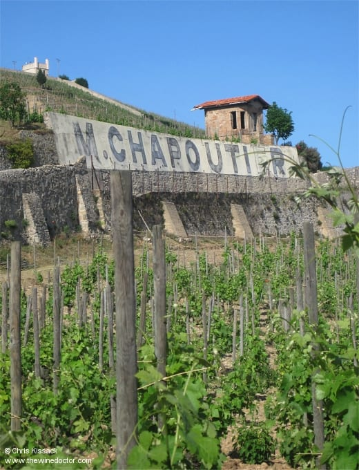 Chapoutier vines of the hill of Hermitage, May 2011
