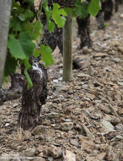 Savennières: The Vineyards